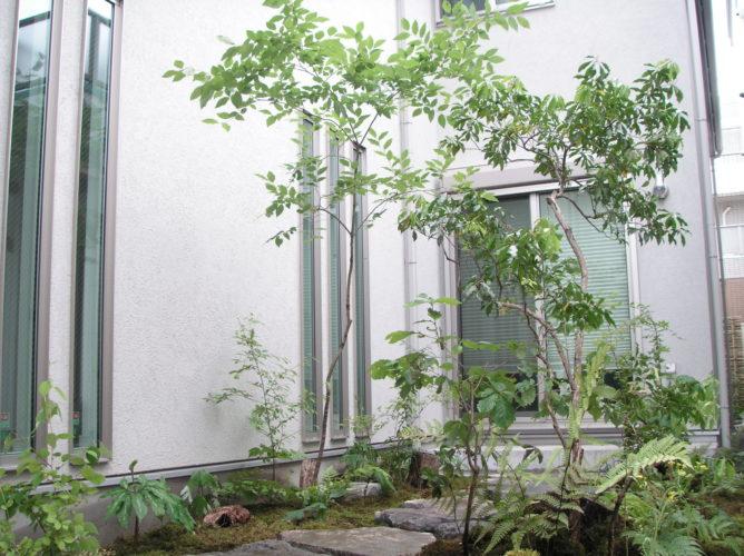 東京都 杉並区にある 庭工事 雑木の庭 完成