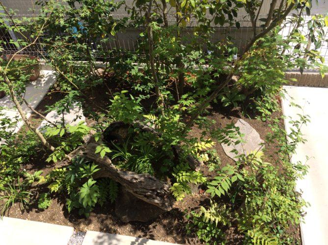 神奈川県 中央林間 植栽工事