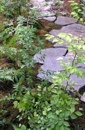 東京都 杉並区 庭工事完成 伊豆産 安山岩の踏み石