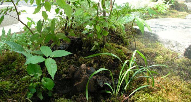 東京都 杉並区 お庭植栽工事完成 山野草の芽吹き