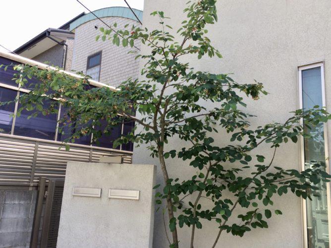 東京都杉並区植木剪定方法の紹介